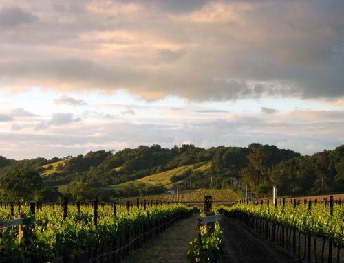 The Impact of Coronavirus on the Fine Wine Industry